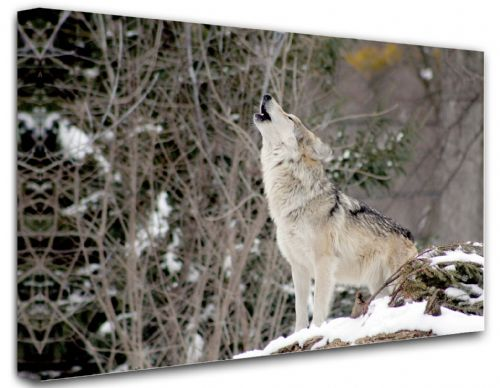Wolf Canvas Wall Art -  Howl